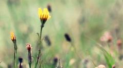 Beautiful flowers in warm sunlight. Village landscape Stock Footage