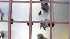 Bottom view glass floor in airport in Antalya, in which passengers walk. Turkey Stock Footage