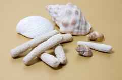 Coral Rubble and Shells on light brown - stock photo