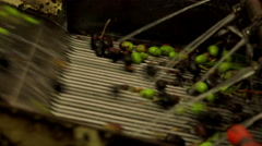 Olive oil production -olive oil mill- washing olives  Stock Footage