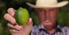 Farmer Examine Green Lime Fruit Suggesting Fresh Food Consumption Close Up View Stock Footage