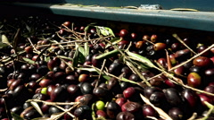 Olive oil mill: olive oil production 4k footage of mechanical olives milling  Stock Footage