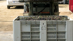 Forklift transporting a chest of olives to control the weight. balance  Stock Footage