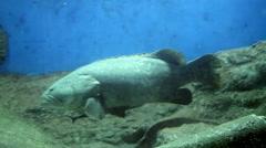 Under water aquarium fish tank - stock footage