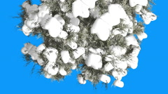 Eastern Red Cedar Coniferous Tree Top Down Snow on Crown on Blue Screen Stock Footage