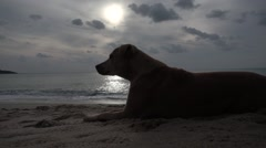 Dog Lying on the Sand at the Beach against the Sea at Dawn. Slow Motion Stock Footage