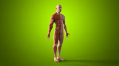 3D human body Anatomy green background Stock Footage