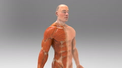 3D human body Anatomy Stock Footage