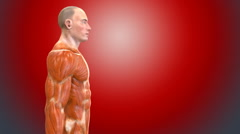 3D human body Anatomy red background Stock Footage