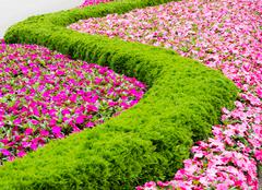 Floral pattern in a park - stock photo