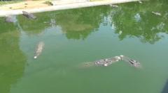 Langkawi Crocodile Farm Feeding Stock Footage