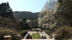 Pear blossom trees, botanical gardens, China Stock Footage
