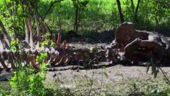 Hippo Skeleton in Kenya, Africa. Stock Footage