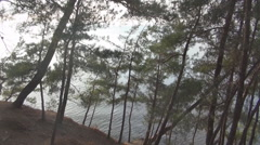Coniferous forest on the sea - stock footage