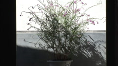 Plant in traditional Chinese courtyard Stock Footage