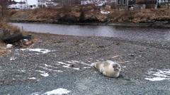 Seal off the side of the road Stock Footage