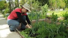 Gardening Woman Picks Carrot Wide Stock Footage