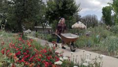 Woman w Wheelbarrow in Garden Stock Footage
