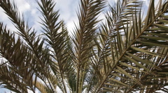 Close-Up of a Palm Tree - stock footage