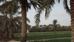 Palm Trees Plantation - stock footage