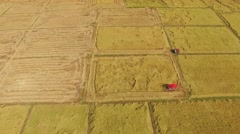 Rice grown up with harvesting. Stock Footage
