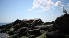 White seagull stands on rocks near sea at sunny day Stock Footage