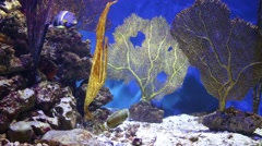 Beautiful fishes, rocks and underwater plants in aquarium Stock Footage
