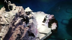 Penguins sit on stones among water in small marine zoo Stock Footage