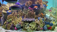 Beautiful bright fishes swim among corals in aquarium Stock Footage