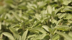 Herbage Garden with nice plants Stock Footage