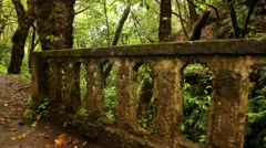 Levada hiking trail on Madeira island - stock footage