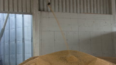 Corn harvest in industry Stock Footage