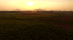 Aerial view of agriculture field in lopburi province central of thailand Stock Footage