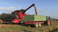 Bean and corn harvest Stock Footage