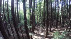 Redwood Trees and Sunlight Stock Footage