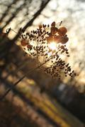 autumn, sun rays, light - stock photo