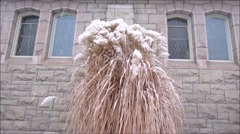 snow on reed and old church building - stock footage