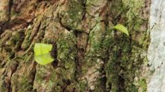 Fire ants walking down rock - stock footage