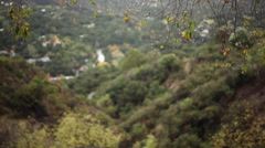 Dripping branches on a rainy day, Santa Monica mountains Stock Footage