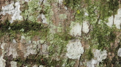 Fire Ants moving through tree - stock footage