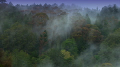 Rotorua Steam Forest - stock footage