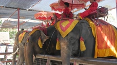 Elephants and driver relax,Ayutthaya,Thailand - stock footage