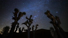 Astro Time Lapse of Constellation Orion Setting over Joshua Tree -Tilt Up- Stock Footage