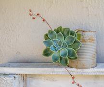 Stock Photo of Succulent pot plant on shelf outside