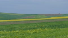 Fertile agricultural area Danube plain in Bulgaria. Stock Footage