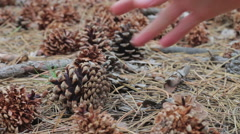 Man picks up a cones in the pine forest Stock Footage