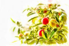 Stock Illustration of Nightshade berries, solanum pseudocapsicum