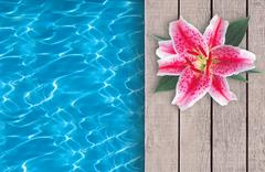 Swimming pool and pink lily on wooden deck ideal for backgrounds Stock Illustration