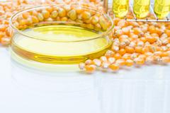 Research corn energy, biofuel and gmo in laboratory Stock Photos