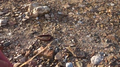 Earthworm Jumping on the Ground. Slow Motion Stock Footage